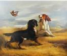 Honden in het veld