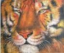 Kop van tijger